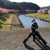 【見頃の早咲き桜2016】南伊豆町「みなみのさくらと菜の花まつり」行ってきた。